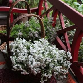 梅雨空と相談しながら~庭の花とハーブを摘んで