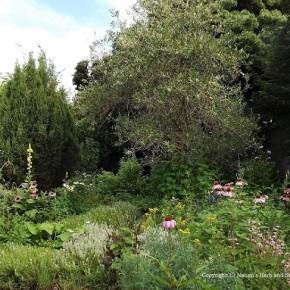 My Garden Scene~花より草の匂いがする今朝の庭
