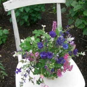 Today's Bouquet~走り梅雨の庭で