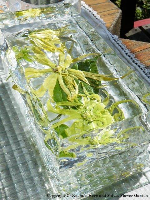 blog31 板氷に花を挟んで