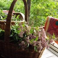 シンプルプルプル~、庭の花やハーブの収穫をしています。