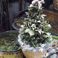 庭のハーブでクリスマスツリーを作ります。