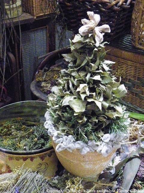 ハーブでクリスマスツリーを作製中