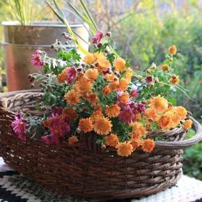 子どもの頃から美しいと知っている秋の花
