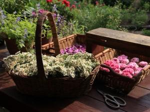 庭で花摘み