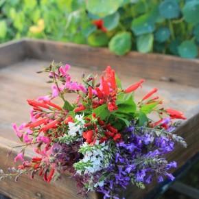 冬の花を小束に