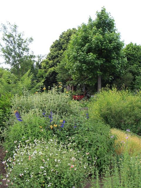 梅雨の前の庭