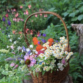 日々の花を摘んで