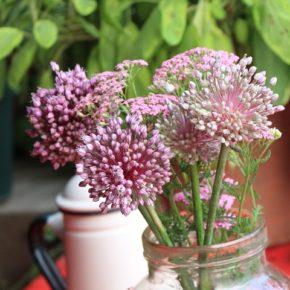 野菜のアリウムの花