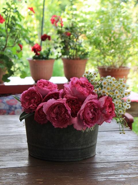 花を摘んで水揚げ中