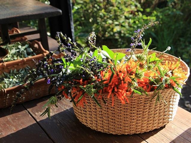 暖色系の秋の花を摘んで
