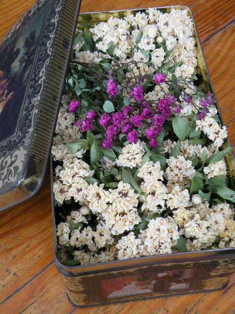 保存容器に入れた花