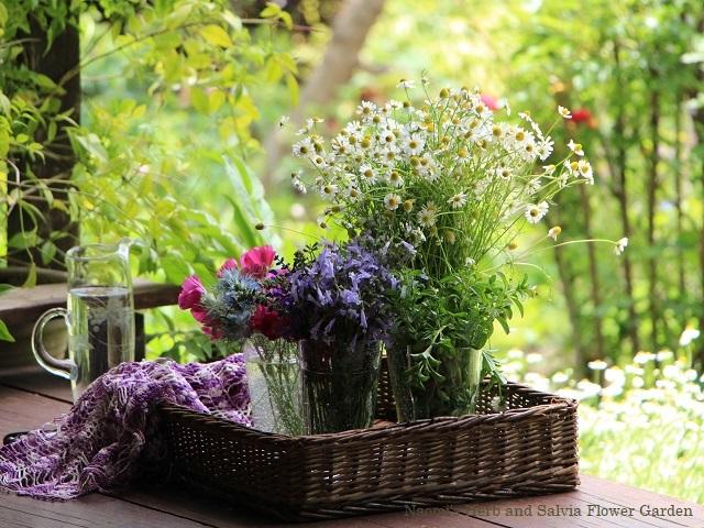 摘んだ花を水揚げ中