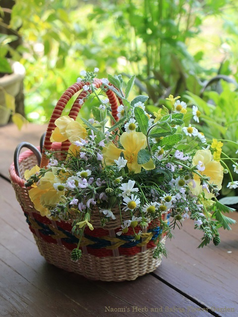 朝食に花を摘んで
