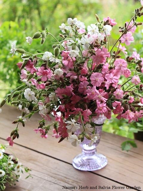 5月の庭でピンク色の花を摘んで