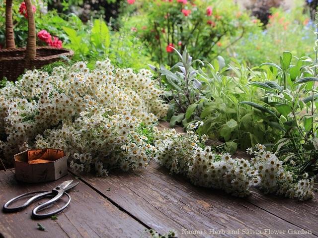 庭の花を収穫~梅雨前に