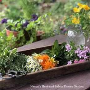 ハーブを摘んで花材に